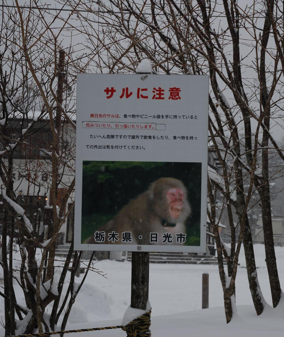 奥日光 獼猴的圖片搜尋結果