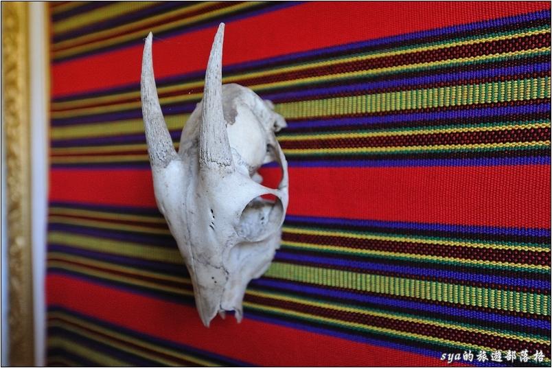 走廊上擺設著動物的頭骨作為裝飾