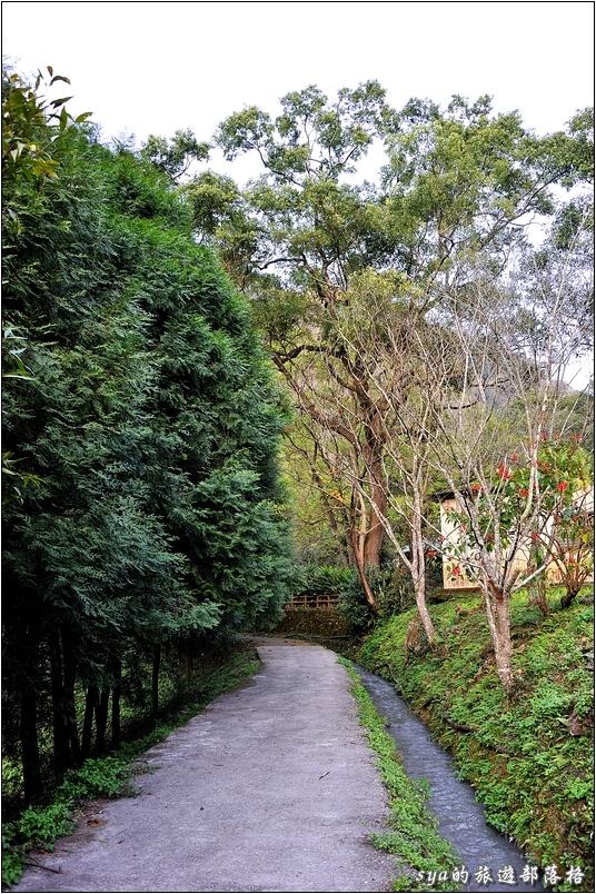 一邊是矗立的松樹,一邊是涓涓的小水流,水流旁則是一整排的楓樹。可惜大部分楓葉已經凋零,如果早知道的話,上上星期來時就來這走走應該很美。