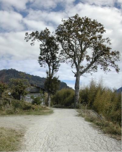 2005年時的夫妻樹